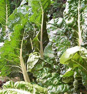 beta vulgaris L. subsp.vulgaris