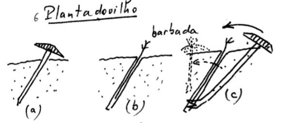 Clot planter une vigne avec le clot etymologie occitane - Planter un pied de vigne ...