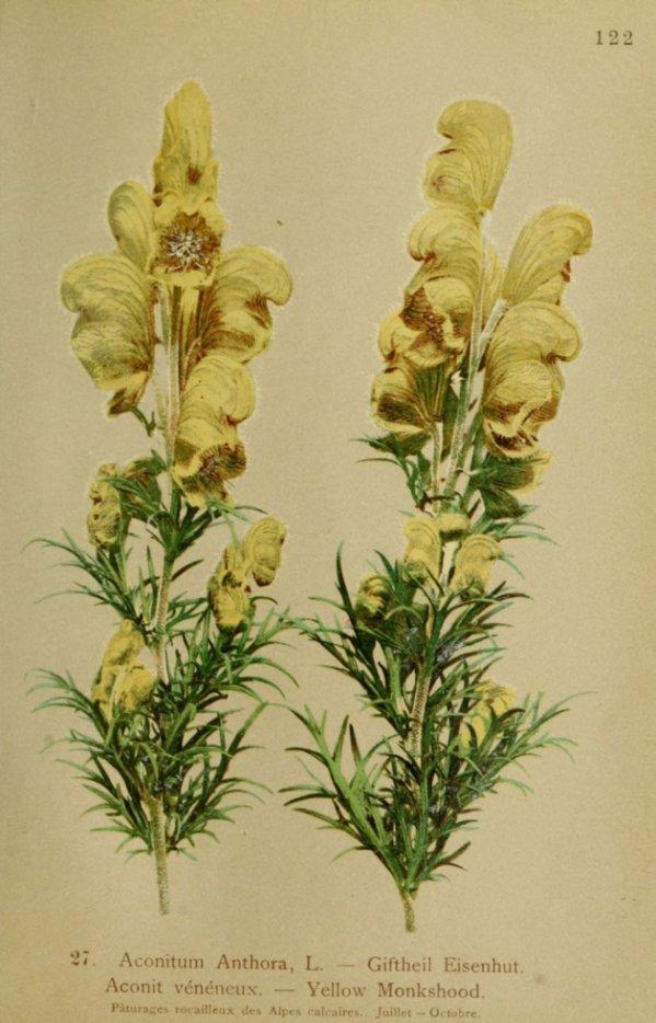 fleurs noms et images et definition